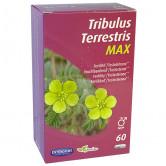 Tribulus_terrestris_max_orthonat