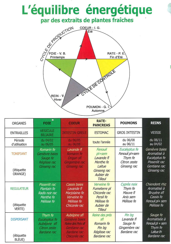 Pentaophyt équilibre énergétique